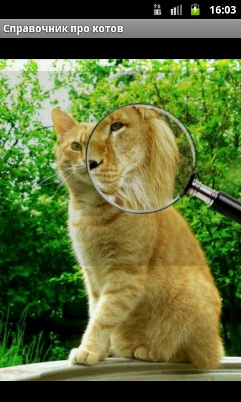 Справочник для котов